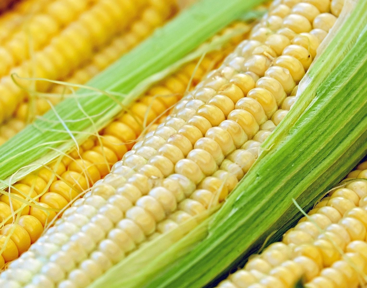 YELLOW CORN (NON GMO)